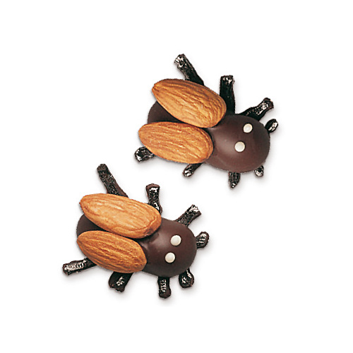 Trüffel-Käfer